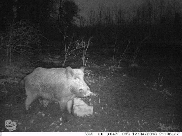 Medžioklės kameros nuo 99€